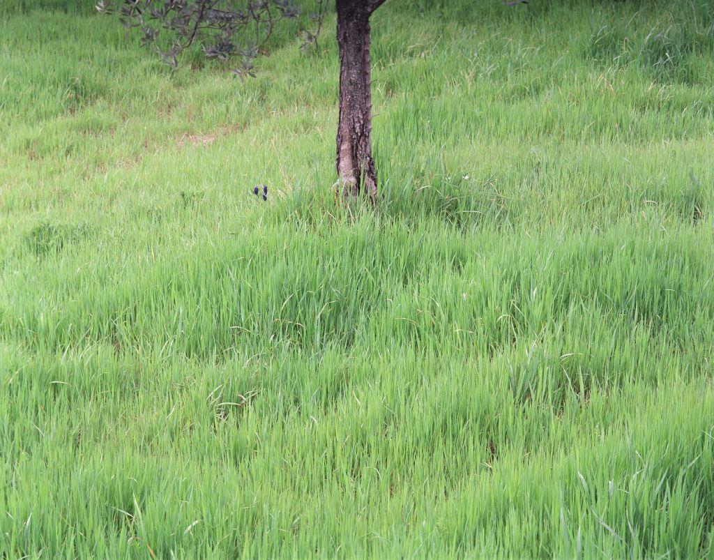 het Gras